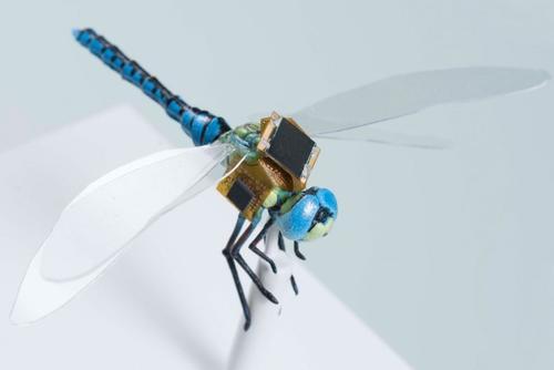 dragonflEye-1485366363997.jpg